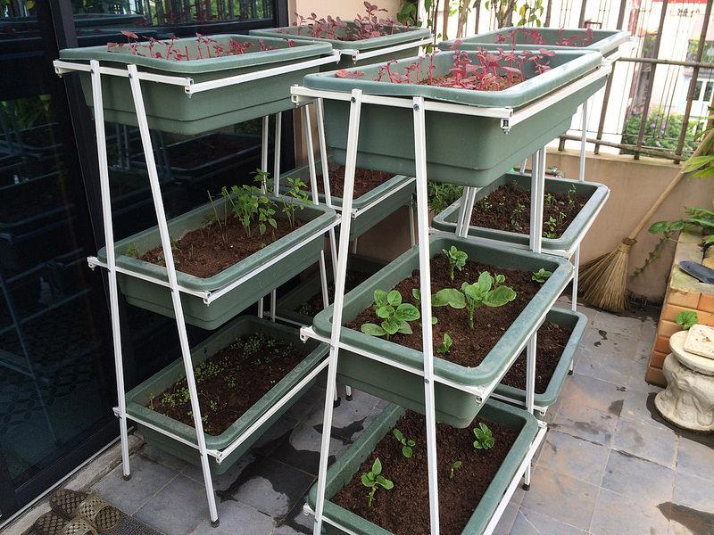 trồng rau sạch trên ban công