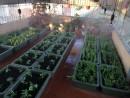 Dịch vụ trồng rau sạch tại nhà Hà Nội