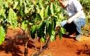 Áp dụng công nghệ tưới nông nghiệp tại Tây Nguyên
