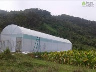 Hỗ trợ 100.000 tỷ đồng cho đầu tư nông nghiệp công nghệ cao