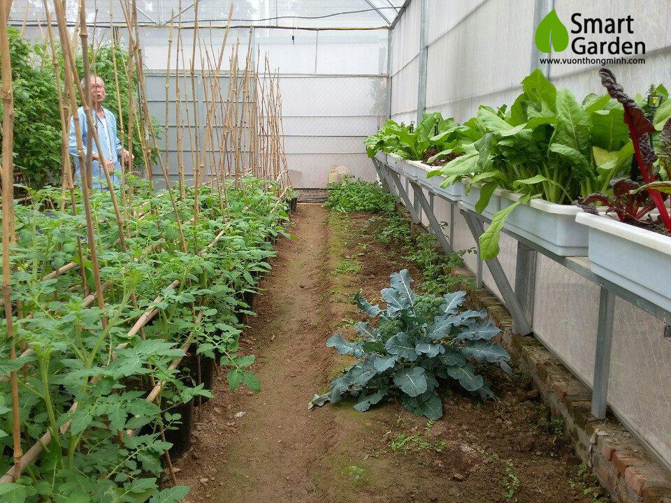 dự án nhà màng trồng rau sạch tại cổ nhuế - Hà Nội