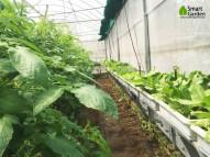 Mô hình nông nghiệp sạch – xu thế tất yếu của xã hội hiện nay