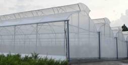 Tại sao nên sử dụng nhà màng nông nghiệp?