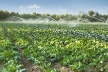 Lợi ích của hệ thống tưới phun mưa trong sản xuất nông nghiệp