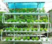 Các phương pháp trồng rau tại nhà phổ biến