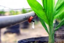 Hệ thống tưới nhỏ giọt cho người nông dân trồng tiêu