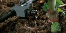Tại sao nên áp dụng hệ thống tưới nhỏ giọt?