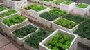 Các ý tưởng trồng rau và phủ xanh vườn vào mùa hè