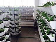 Kệ trồng rau sạch thông minh