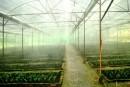 Hệ thống tưới phun sương thông minh
