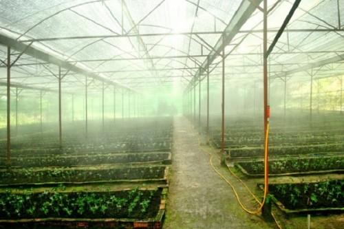 HÌnh minh hoạ: Tại sao nên xem xét trồng rau trong nhà kính?