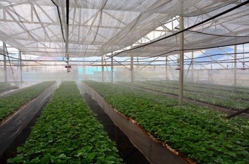 Minh hoạ: tưới rau tự động trong nhà kính như thế nào cho tốt?