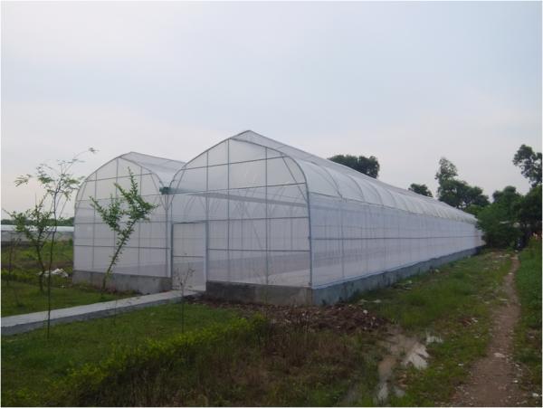 Chi phí làm nhà lưới trồng rau an toàn có đắt hay không?