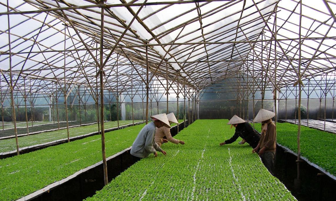 Một số điều cần lưu ý khi xây dựng hệ thống nhà kính trồng rau
