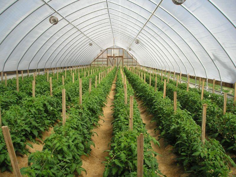 Mô hình nhà lưới trồng rau sạch đảm bảo an toàn cho cây trồng