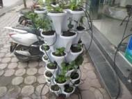 Bộ trồng rau tại nhà-BK001
