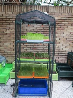 Giá kệ trồng rau mầm
