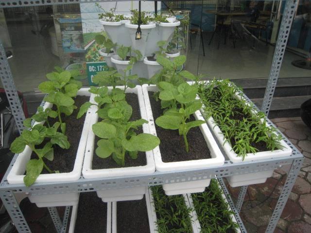 Bộ trồng rau tại nhà-BK002