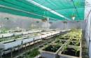 Dự án nhà lưới trồng rau sạch tại thị trấn Vương- Hưng Yên