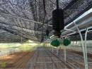 Lắp đặt hệ thống tưới nhà màng tại Ba Vì