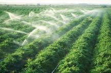 Tìm hiểu về hệ thống tưới phun mưa