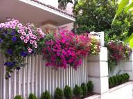 Một số loài hoa dễ trồng để khu vườn trở nên lộng lẫy