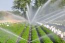 Lợi ích của hệ thống tưới phun mưa tự động trong nông nghiệp