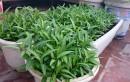 Tự trồng rau sạch tại nhà: an toàn, tiết kiệm tại sao không?