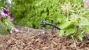 Hệ thống tưới nhỏ giọt – sự lựa chọn của nhà nông