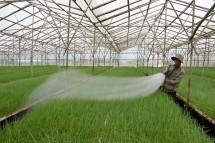 Mô hình nhà kính trồng rau: giải pháp cho bà con nông dân
