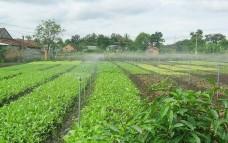 Những ưu điểm nổi bật của hệ thống tưới nước phun mưa