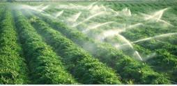 Hệ thống tưới phun mưa hiện đại phục vụ cho trồng trọt