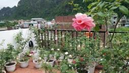 Tầm quan trọng của hệ thống tưới phun mưa cho cảnh quan sân vườn, biệt thự