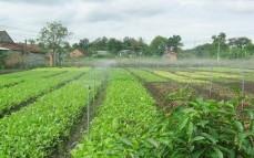 Hiệu quả đến từ mô hình nhà kính trồng rau