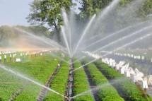 Đừng bỏ qua những lưu ý sau đây khi lắp đặt hệ thống tưới phun mưa