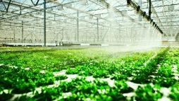 Ứng dụng công nghệ 4.0 trong trồng trọt