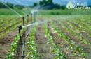 Hệ thống tưới phun mưa nâng cao năng suất, đẩy mạnh kinh tế nông nghiệp