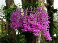 Các loại hoa phong lan dễ chăm sóc nhất cho người mới bắt đầu