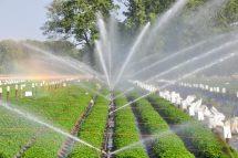 Cái nhìn tổng quan nhất về hệ thống phun nước tưới cây tự động