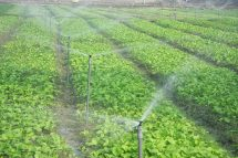 Tính tự động hóa của hệ thống tưới nước phun mưa cho các vườn rau