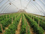 Chọn nhà màng cho hệ thống trồng rau